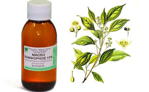 Camphor oil for the face: recipes for acne, wrinkles and